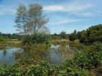 Photo 1: A view along the contour wetland