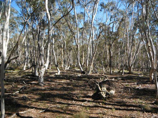 moribund forest