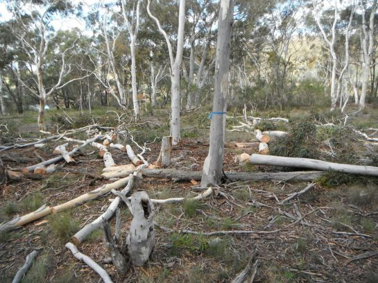 Pre-felling, trees are marked as either existing habitat or recruitment trees under the Private Native Forestry guidelines. Trees are thinned to a given basal area depending on the forest type.