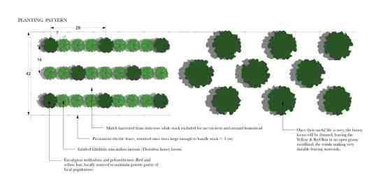 Planting pattern2